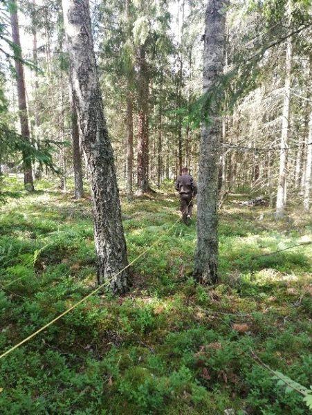 Medžio aukščio matavimas2