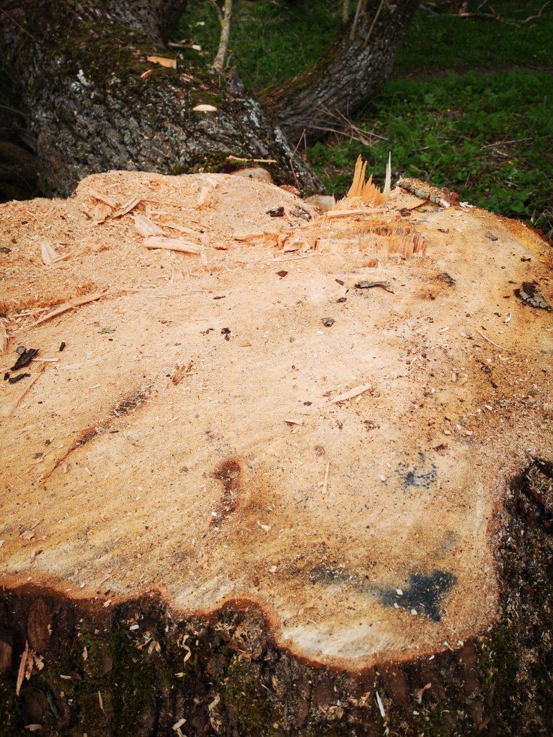 medžiai kudirkos naumiestis