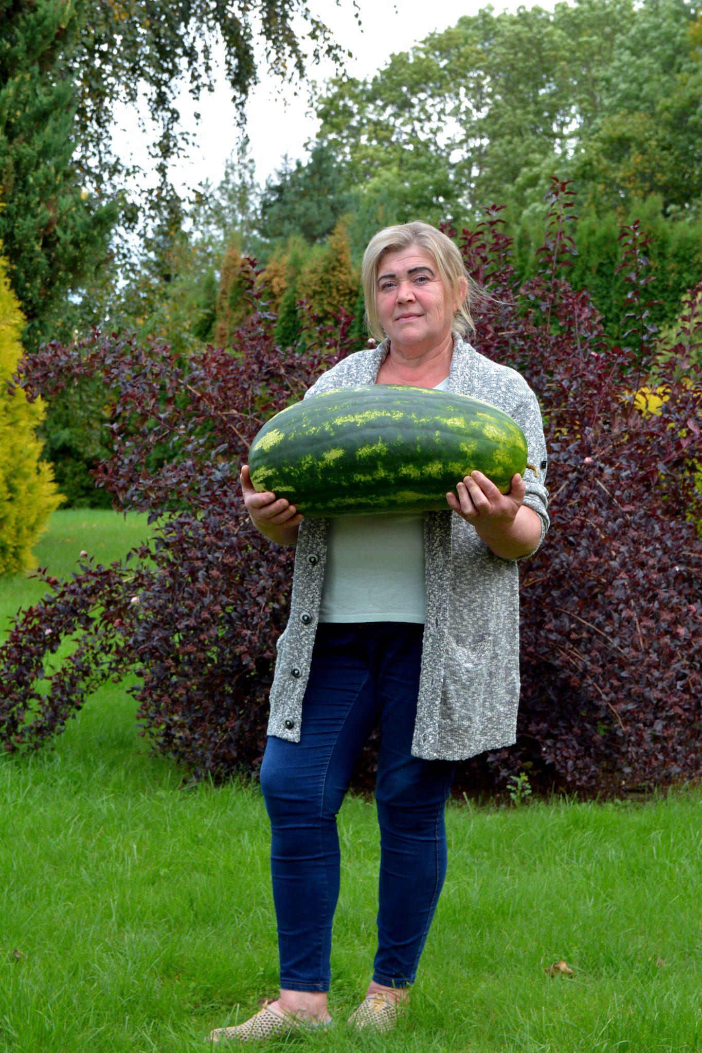 Rekordinio dydžio arbūzas