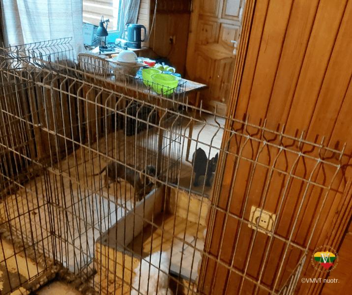 Nelegali gyvūnų veisykla